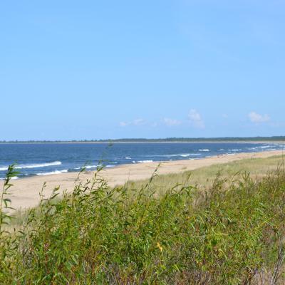 Wyspa Sobieszewska - piękna przyroda i dziewicze plaże