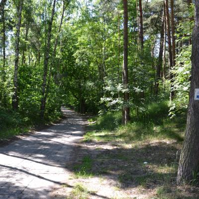 Szlak rowerowy Wincentego Pola w Sobieszewie