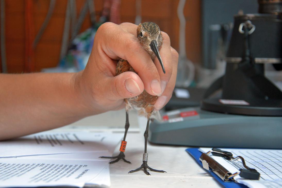 Każdy zaobrączkowany ptak musi zostać zarejestrowany w specjalnym katalogu