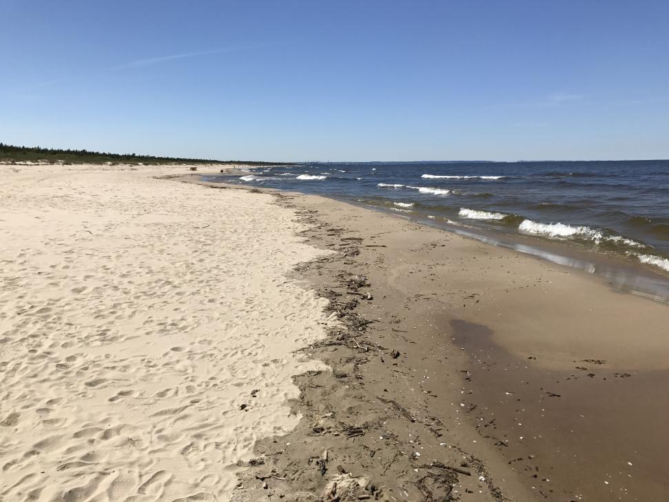 Kiedy na brzegu morza znajdują się drobne kawałki drewna oznacza to, że łatwo znajdziemy bursztyn