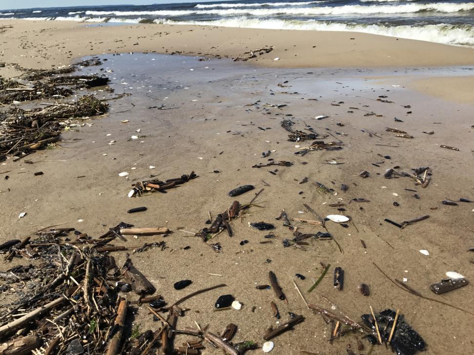 Idealne warunki do poszukiwania bursztynu na brzegu Wyspy Sobieszewskiej