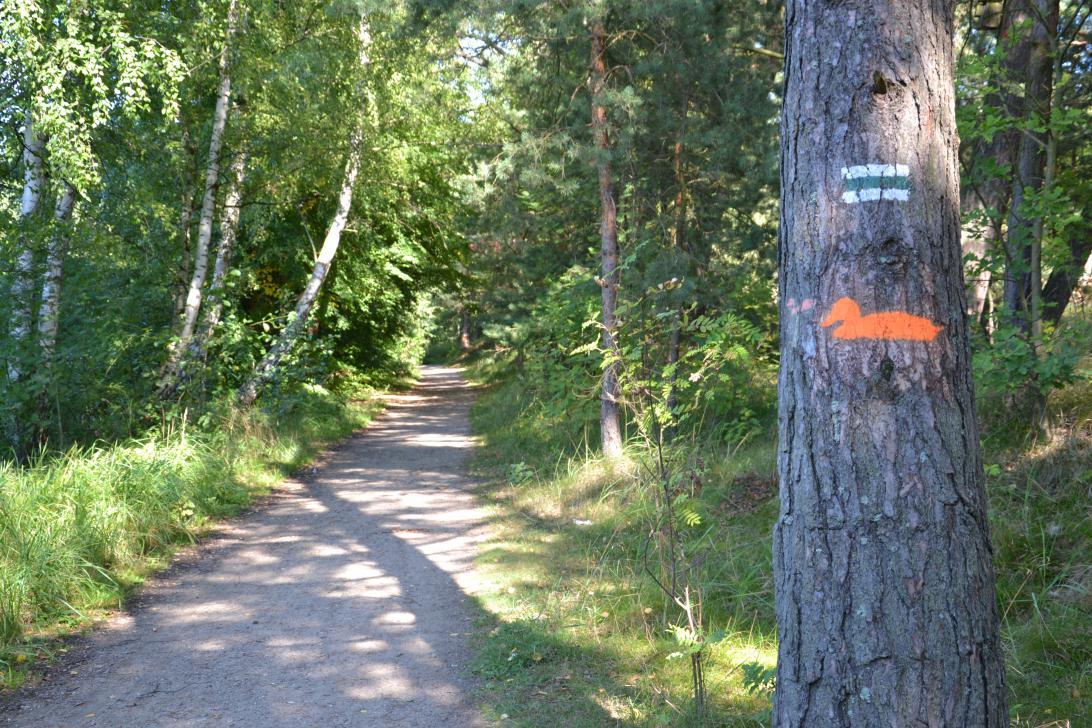 Ścieżka oznakowana jest symbolem pomarańczowej kaczki