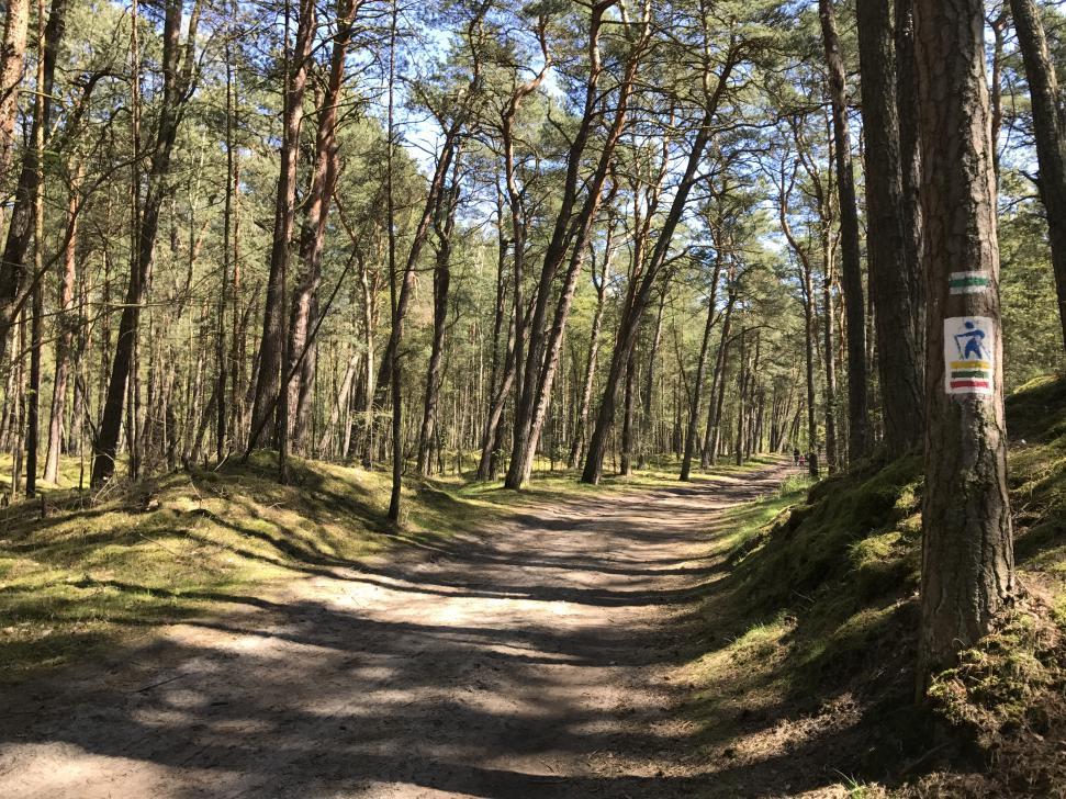 Szlak Nordic Walking i narciarstwa biegowego w Sobieszewie