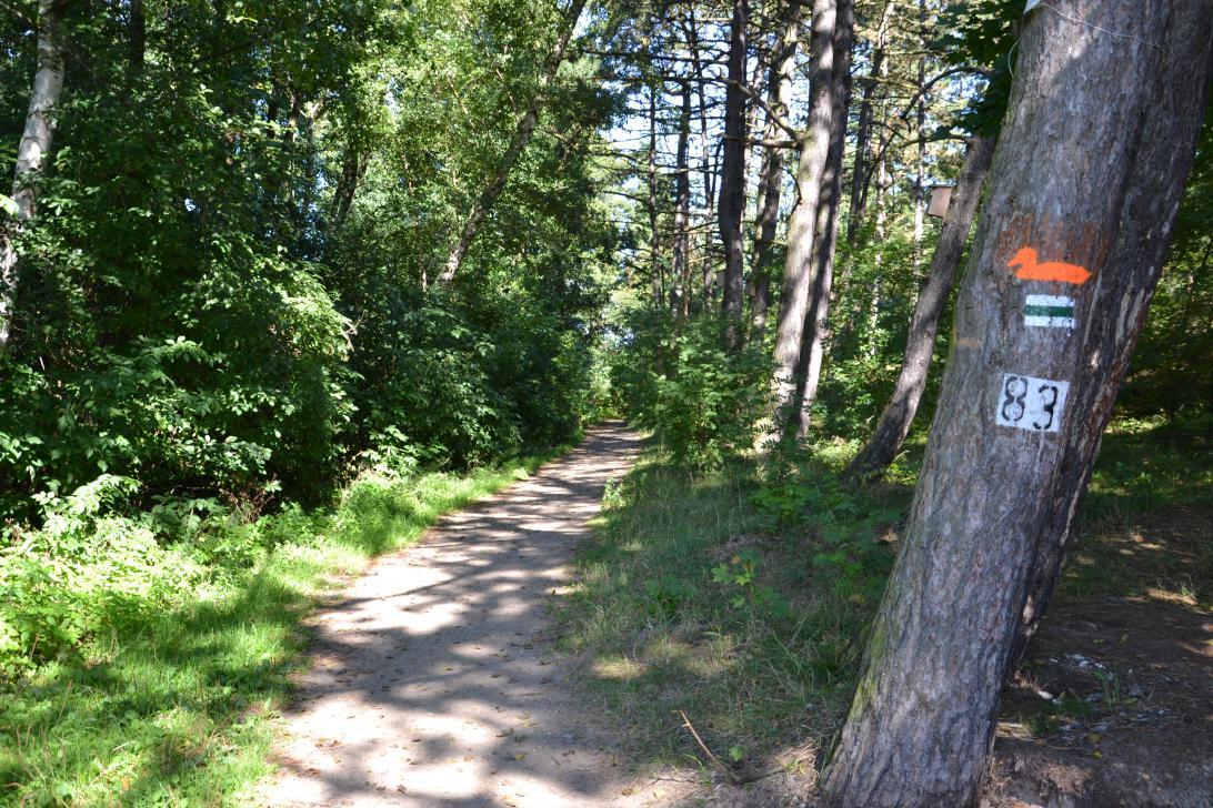 Początek szlaku Wyspy Sobieszewskiej w Górkach Wschodnich
