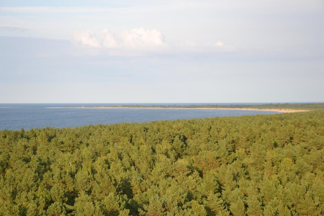 Używając lornetki można podziwiać zakrzywiony kształt północnego wybrzeża Wyspy Sobieszewskiej
