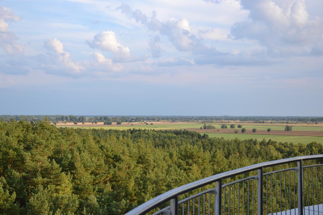 Z tarasu widokowego mamy także możliwość podziwiania krajobrazu żuławskiego, który dominuje w południowej części Wyspy Sobieszewskiej
