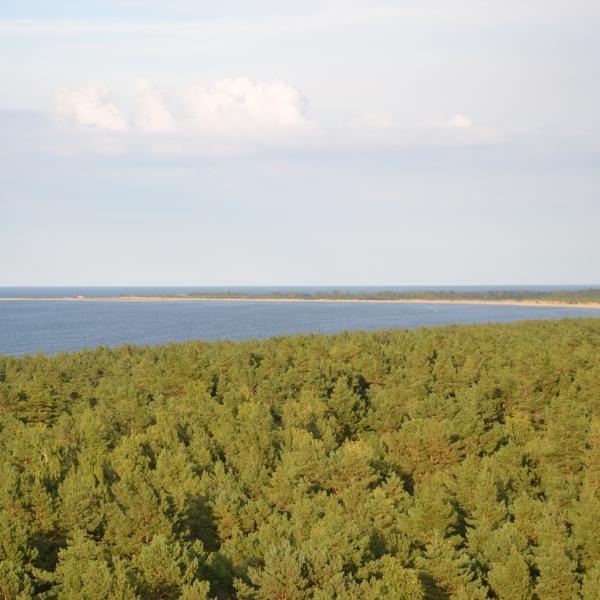 Widok z tarasu wieży widokowej na morze i plaże Wyspy Sobieszewskiej