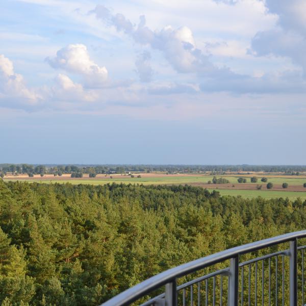 Z wieży można także podziwiać krajobraz żuławski, dominujący w północnej części wyspy